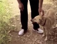 Canlı canlı toprağa gömülen bebeği köpek kurtardı!