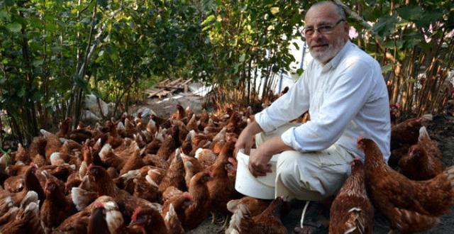 7 Sene Önce 60 Tavukla İşe Başlayan Acemi Adam, Büyük Galibiyet Yakaladı