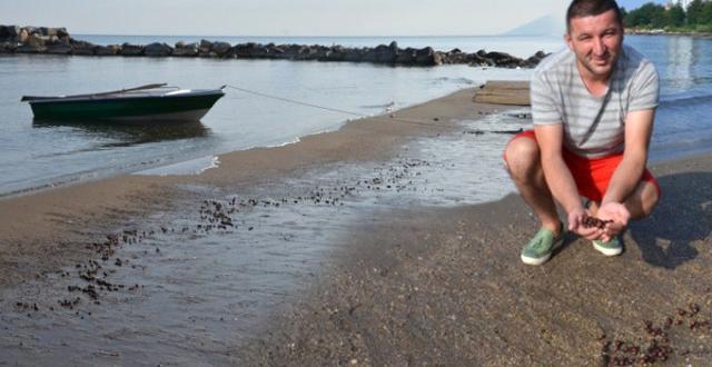 Ordu'da Selin Yuttuğu Tonlarca Fındık Sahile Vurmaya Devam Ediyor