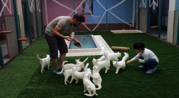 Van kedilerine özel villa