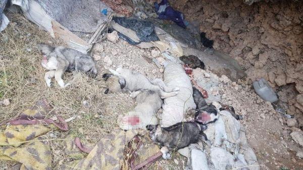 Uşak 'ta 5 köpek yavrusu parçalanmış halde bulundu