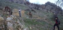 Aç kalan kurt sürüsü köye indi atlara saldırdı