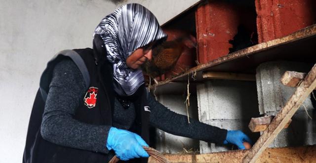 Engelli Yurttaş, Devlet Desteği ile Kurduğu Tavuk Çiftliğinde Siparişlere Yetişemiyor