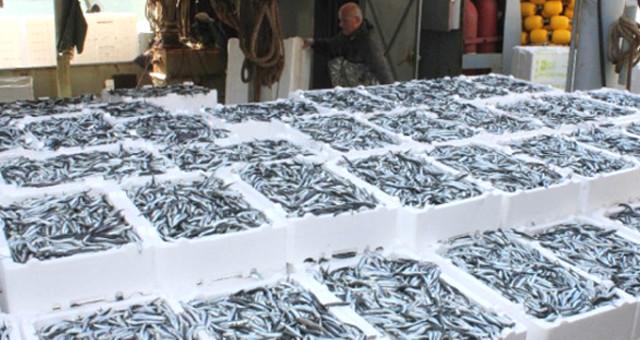Yurttaş Bu Sene Hamsiye Doyacak! Balıkçılar Karadeniz'de 3 Günde Bin 500 Ton Ançuez Avladı